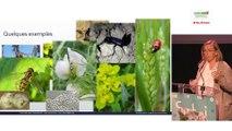 Véronique SARTHOU - L'intérêt de préserver la biodiversité fonctionnelle en agriculture