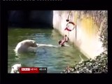 Woman attacked by Polar Bears at Berlin Zoo - Woman attacked by Polar Bears at Berlin Zoo - Polar