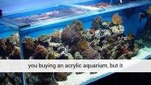 Aquariumplantsuk A Great Blog And Great Products Birmingham