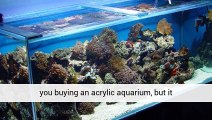 Aquarium Plants Uk Store A Great Blog And Great Products Cornwall