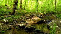 60 Minutes of Binaural Woodland Ambiance (Nature Sounds Series #6) Trickling Stream & Bird