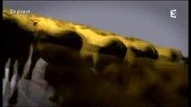 Super comice de Pontarlier - Emission spéciale
