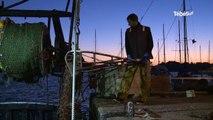 Morbihan. La pêche à la coquille Saint-Jacques est lancée