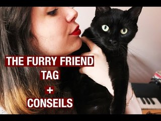 TAG : THE FURRY FRIEND TAG | Because Cats