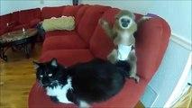 Video divertenti animali pazzi, Video da ridere. Da morire dalle risate #11