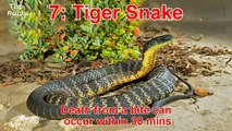 Top 10 Most Deadliest and Venomous Snakes in the World - Most Dangerous and Poisonous Snake Ever