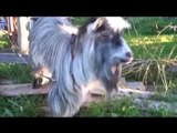 Funny videos - Funny new clips - Funniest recent animals - August   2015 must watch