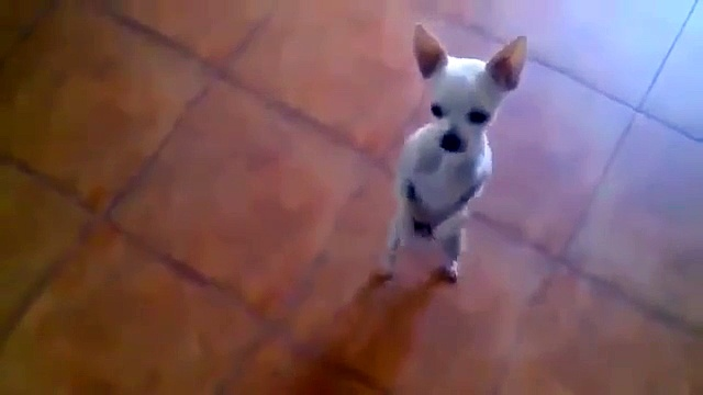 Funny dog video 2015
