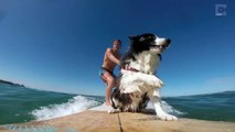 Surfing Dogs On A Mission To Be Professional Surfers