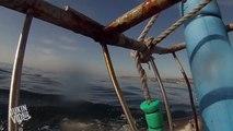 Great White Shark Breaches | I Soiled My Breaches