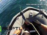 USA : des secouristes libèrent une baleine à bosse piégée dans un filet de pêche