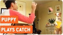 Dog Catches Balls In A Bucket | Playing Catch