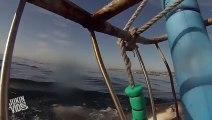 Great White Shark Breaches  I Soiled My Breaches