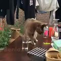 bad cat owner.  cat sugaring his cup and he took it away so rude