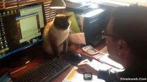 ESPECIAL DE GATOS FELINOS ANIMALES Y MASCOTAS RECOPILACION DE LOS MEJORES MOMENTOS GATUNOS NOVIEMBRE 2015
