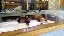Cute Sloth A Funny And Cute Sloth Videos Compilation 2015