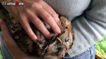 Cute Animals Cuddling A Cute Animal Videos Compilation 2015