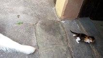 Un gros chien est effrayé par un tout petit chaton !