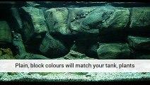 Aquarium Plants Aquarium Tank Live Aquarium