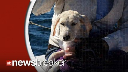 Sailors Rescue Puppy Lost at Sea off Italian Coast for Hours