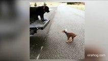 (SAD MOMENT) Watch adorable sad moment puppy misses big jump