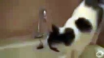 Unusual thirst quenching. Funny cat drinks water from the tap