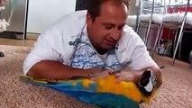 Ein Mann mit einem Papagei. Freundschaft Mann und Papagei