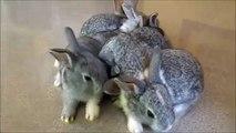 Mom Albino. Lustiges Kaninchen und 6 Kaninchen
