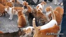 Cat Island (partie 2). Chats drôles mangent