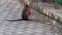 Divertido mono. Amuse divertido mono