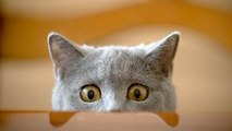 Funny Cat Videos 2015 Try Not to Laugh! - Funny Kitty Cats, Crazy Cats, Funny Animals