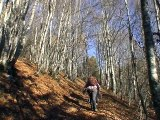 Flaneries dans les bois des Replats - Aillon-le-Jeune 73340 Parc Naturel des Bauges