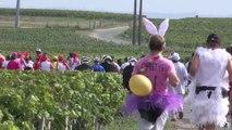 Marathon du Medoc 2015 du 8 ème au 12 ème km / replay  Medoc Marathon from  8 to 12 th km