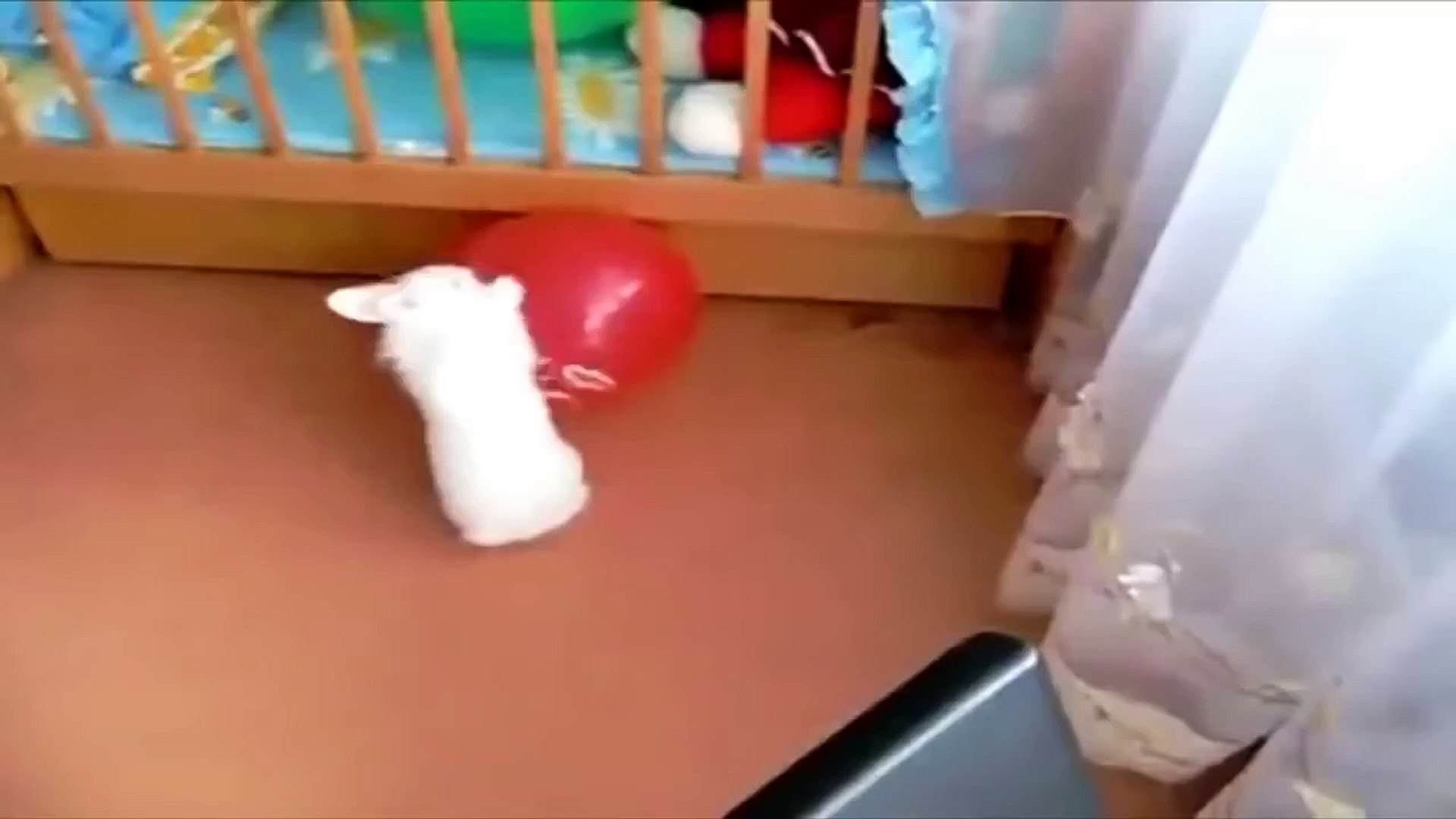 Кролик лопнул шар ПРИКОЛ