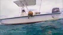 Dog sees Dolphins from boat What happens next will touch your heart forever