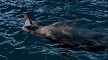 SeaWorld San Diego Fin des shows avec des orques