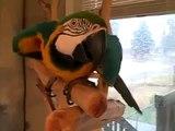 Araras rir muito contagiosa! Risos engraçados do papagaio