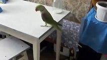 Parrot joue avec un chat avec sa longue queue. Un chat et un perroquet