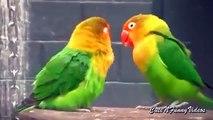 La reconnaissance des oiseaux. Déclaration de perroquet drôle de l'amour