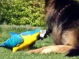 Chien et Ara jouer avec un bâton. Funny dog et le perroquet