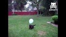 Chien et un ballon. Drôle chien jouant avec le ballon