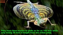 Strange and Unusual Flying or Jumping Animals Animals World