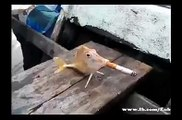 Fish enjoying cigarette Must Watch Very Funny