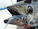 Charlie & Matthew on fire! _ Pêche sportive du thon rouge _ Blue fin tuna on the fly