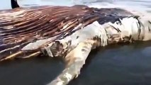 MIRACLE OFALLAH - Giant Weird Creature found at Karachi Beach