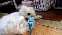 Papagaio-like cão. Cão engraçado e papagaio