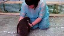 Pingouin propos mignon. Pingouin drôle et fraîche