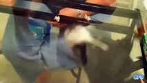 Tables transparent. Chats et chiens contre la table de verre