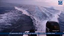 Deux pêcheurs poursuivis par plusieurs orques aux Etats-Unis