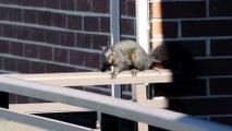 Il filme cet écureuil, mais ce que l'animal fait laisse l'homme sous le choc!